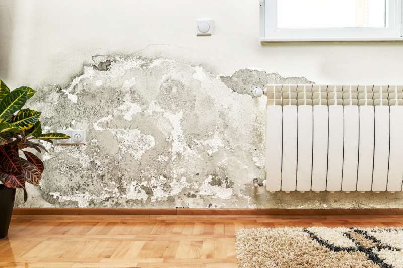 A wall that has mold removal services performed on it in Mercer County, NJ