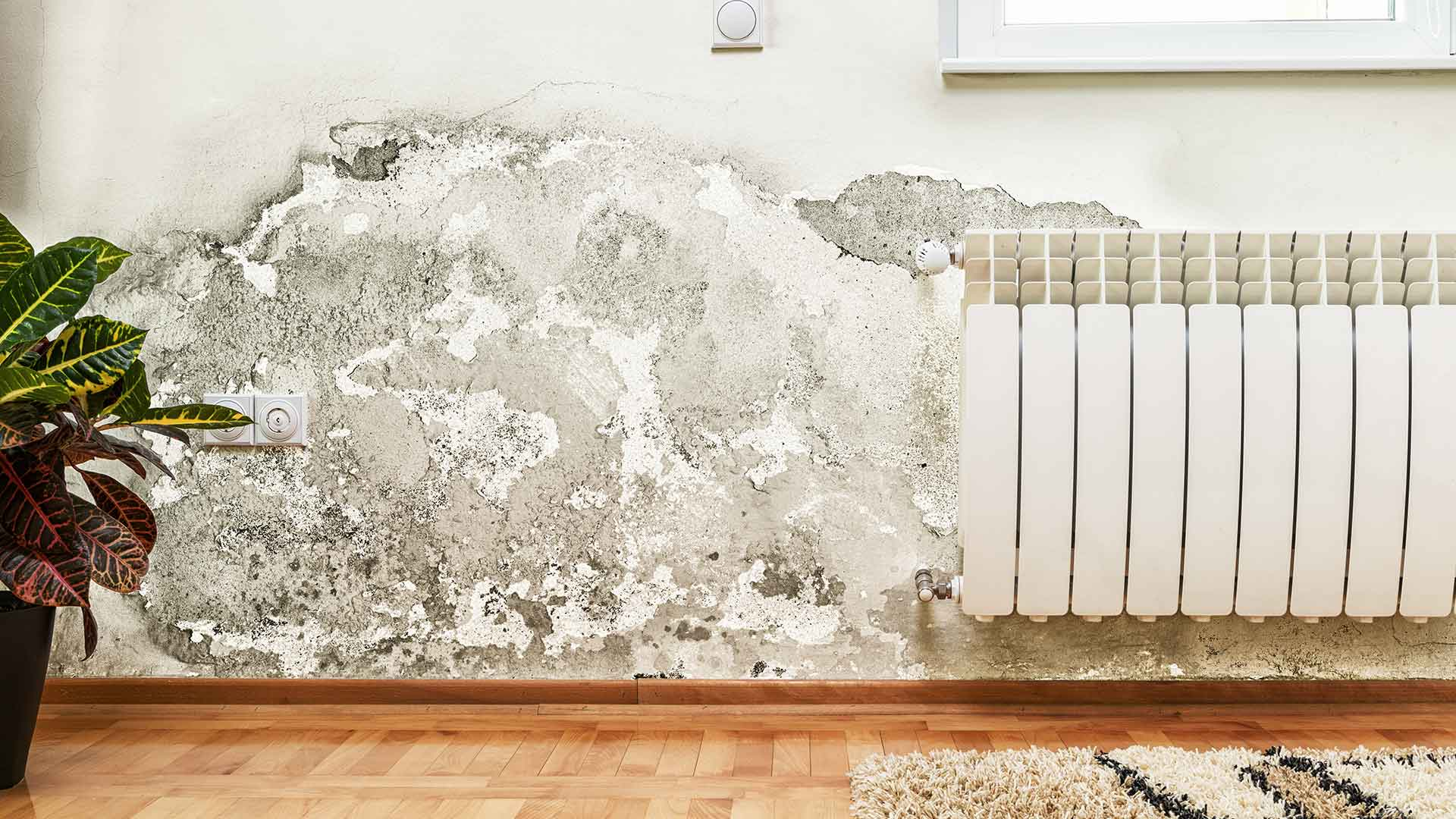 Reconstruction Mold Remediation Mold Removal and Mold Testing